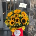 BOX GIRASOLES